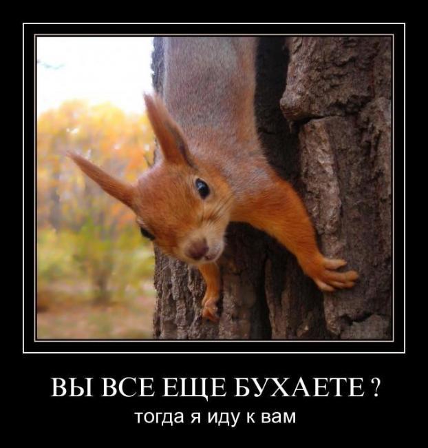 Demotiff ucoz ru самые смешные демотиваторы